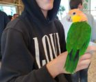 papugi03