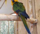 papugi14