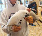 papugi17