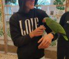 papugi19