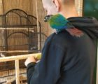 papugi01