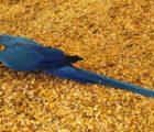 papugi18